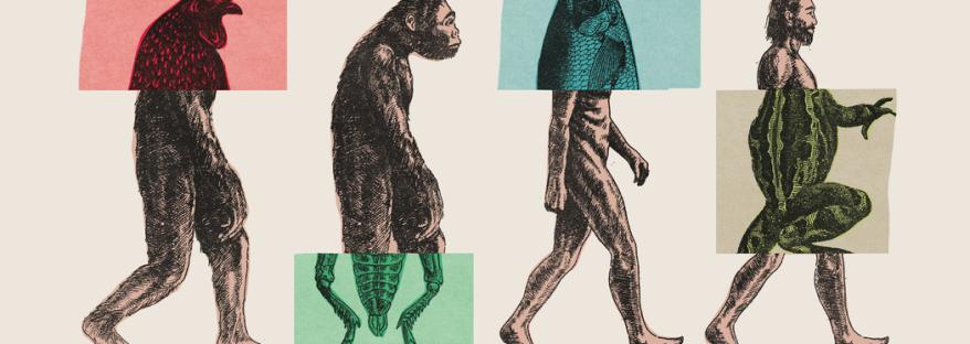 Conferenza Biologia Evoluzionistica AstroMirasole